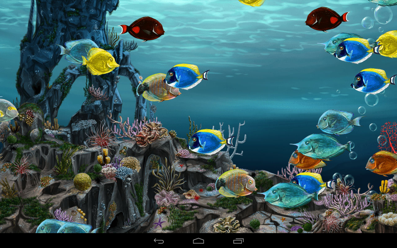 koi fish live wallpaper free download for mobile